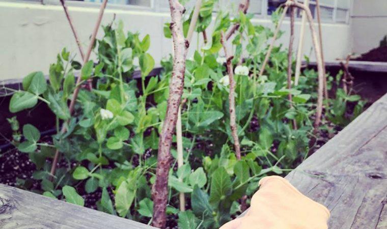 lp garden 2
