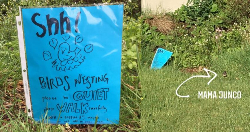 handmade sign warns students and staff to give space to nesting juncos next to a blurry picture of one of said juncos