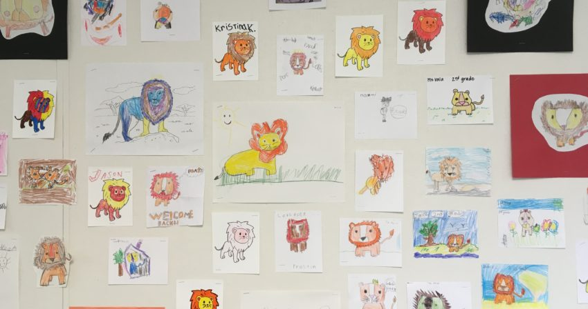 bulletin board display of many lions drawn by students